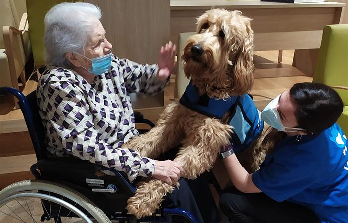 teràpia assistida amb gossos